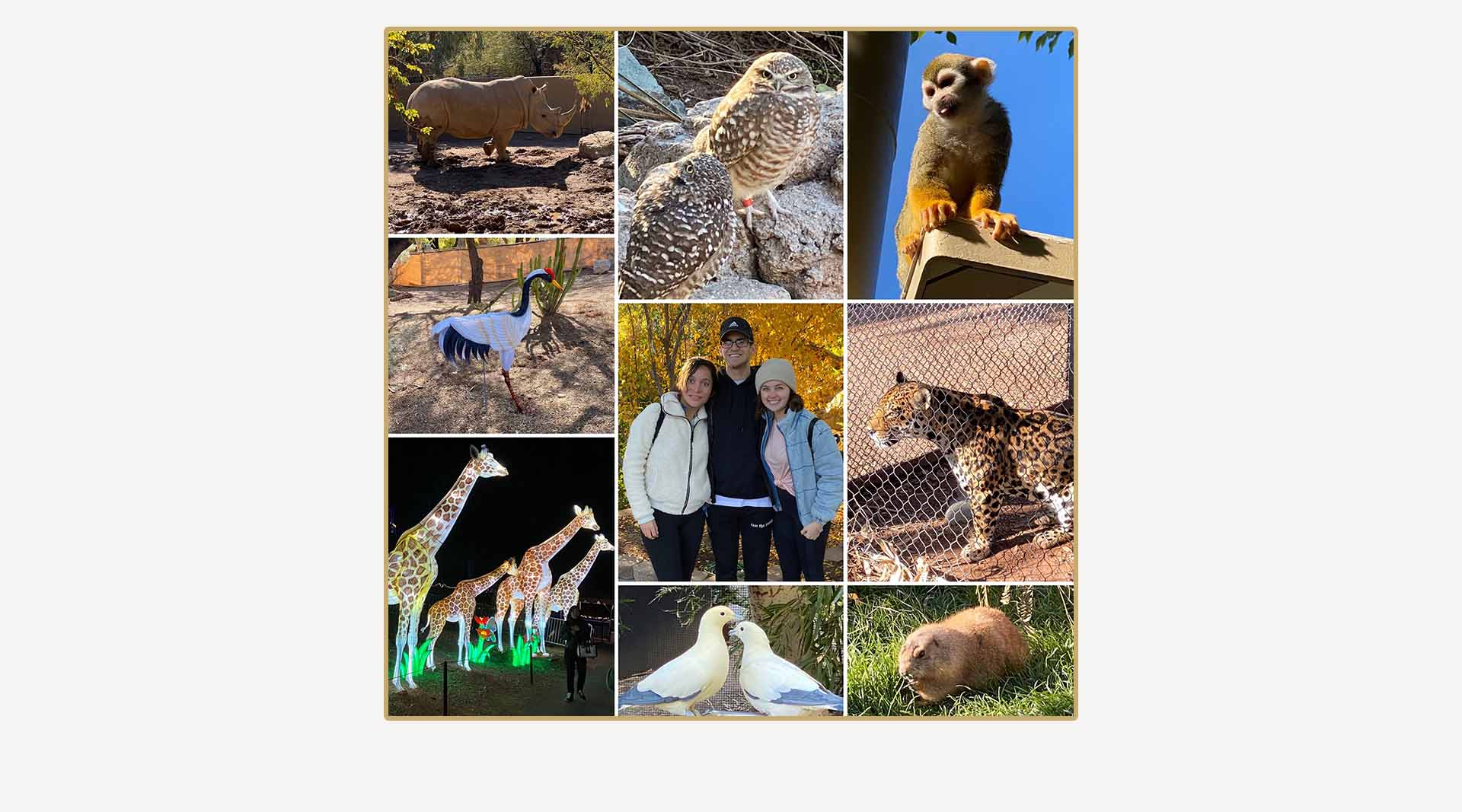 Photo collage created by Clamshell Communications - Images from the Phoenix Zoo